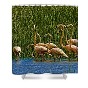 Flamingo Family Shower Curtain