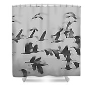 Flight Of The Sandhill Cranes Shower Curtain