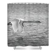 Flight Of The Swan Shower Curtain