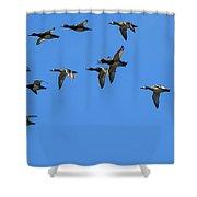 Flock Of Redhead Ducks In Flight Shower Curtain
