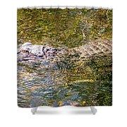 Florida Alligator Shower Curtain