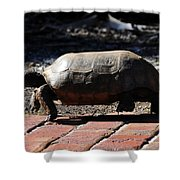 Florida Gopher Tortoise Shower Curtain