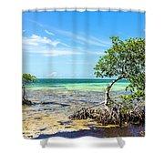 Florida Keys Mangrove Reef Shower Curtain