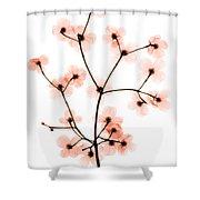 Flowering Dogwood X-ray Shower Curtain