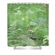 Fluffy Ferns Shower Curtain