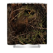 Forest Gnome Shower Curtain