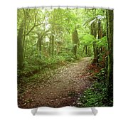 Forest Walking Trail 1 Shower Curtain