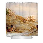 Fox And Pheasants In Winter Shower Curtain by Anonymous