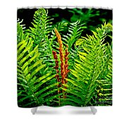 Fern Fractals In Nature Shower Curtain