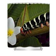 Frangipani Tree And Caterpillar Shower Curtain