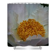 Franklin Tree Flower 1 Shower Curtain