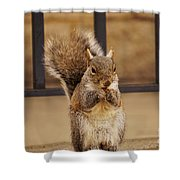 French Fry Eating Squirrel Shower Curtain