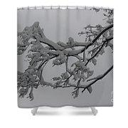 Fresh Snow On Magnolia Tree Shower Curtain