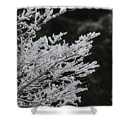 Frozen Branches Shower Curtain