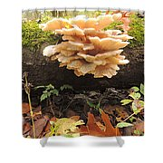 Fungus Shower Curtain