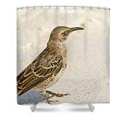 Galapagos Hood Mockingbird Shower Curtain