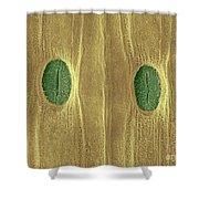 Garlic Leaf Stomata, Esem Shower Curtain