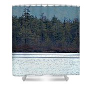 Geese On Labrador Pond Shower Curtain