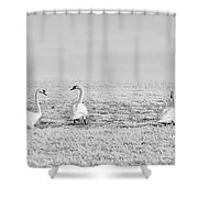 Geese Surrounded By Hoarfrost Shower Curtain