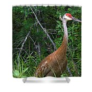 Getting Close Shower Curtain