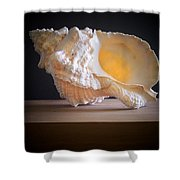 Giant Frog Shell Shower Curtain