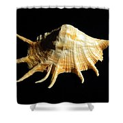 Giant Spider Conch Seashell Lambis Truncata Shower Curtain