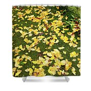 Ginkgo Biloba Leaves Shower Curtain