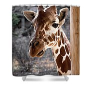 Giraffe Head Shower Curtain