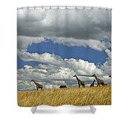 Giraffes On The Horizon Shower Curtain