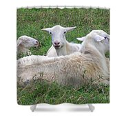 Goat Family Shower Curtain