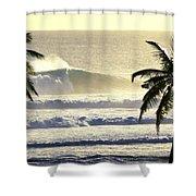 Golden Palms Shower Curtain by Sean Davey