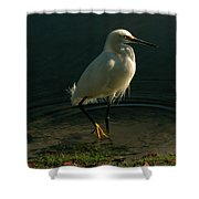 Golden Slippers Shower Curtain
