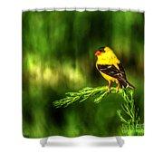 Goldfinch On Grass Shower Curtain