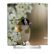 Goldfinch Spring Blossom Shower Curtain