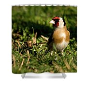 Goldfinch Spring Shower Curtain