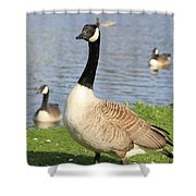 Goose Shower Curtain