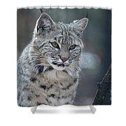 Gorgeous Bobcat's Face Up Close Shower Curtain