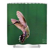 Grace Of A Hummingbird Shower Curtain