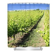 Grapevines In A Vineyard Shower Curtain