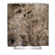 Grass Blade Shower Curtain