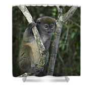 Gray Bamboo Lemur Shower Curtain