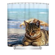 Gray Cat On The Background Of The Sea 1 Shower Curtain