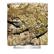 Gray Tree Frog Shower Curtain