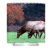 Grazing Together Shower Curtain