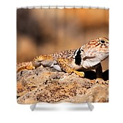 Great Basin Collared Lizard Shower Curtain