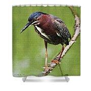 Green Heron At Gilbert Riparian Preserve Shower Curtain