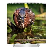 Green Heron Shower Curtain
