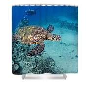 Green Sea Turtles  Shower Curtain by Dave Fleetham - Printscapes