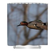 Green-winged Teal Flies Over Shower Curtain