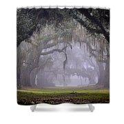 Greenwood's Oak Alley Shower Curtain